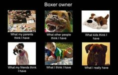 LOL ~ Boxer owners