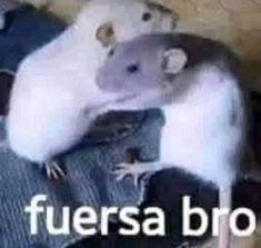 Memes Estúpidos, Cute Memes, Stupid Memes, Funny Memes, Reaction Pictures, Funny Pictures, Memes Lindos, Funny Animals, Cute Animals
