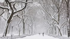 I hope Central Park looks like this when I there next month!