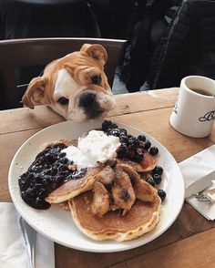 give me something to eat! nikki loves something sweet Cute Little Animals, Cute Funny Animals, Funny Dogs, 9gag Funny, Cute Dogs And Puppies, Doggies, Cute Creatures, Animals Beautiful, Animals And Pets