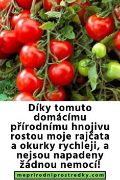 Vegetables, Gardening, Lawn And Garden, Vegetable Recipes, Veggies, Horticulture