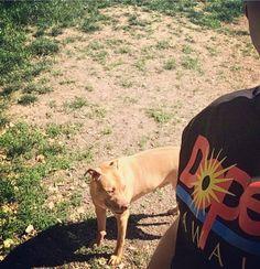 Pitbulls are pure evil... Obviously See More at fb.me/pitloversclub #pitbull #pitbullsofinstagram #pitbulls #pitbulllove #pitbulladvocate #pitbulllife #pitbullsofig #pitbullpuppy #pitbullmom #pitbullmix #pitbullsofficial #pitbullpride #pitbullinstagram #pitbulllover #pitbulllovers #pitbullnation #pitbullgram_ #pitbullterrier #pitbullgram #pitbullfriends #pitbullsarelove #pitbullrescue #pitbullvixens #pitbullove #pitbullproblems #pitbullfamily #pitbullmommy #pitbullsofinsta #pitbullsrule…