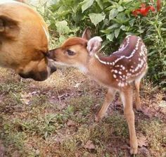 True nature of a pit: love and b loved!
