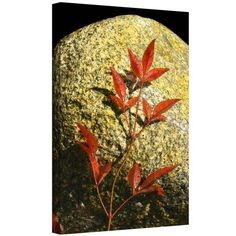 Dean Uhlinger Natural World 15 inch Gallery-Wrapped Canvas, Size: 12 x 18, Red