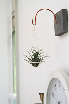 Items similar to Suspended Air Plant Disc // Hanging Plant Holder // Unique handmade home decor // Living art on Etsy - Suspended Air Plant Holder // Hanging Plant Disc // Unique handmade home decor // Living art on Ets - Hanging Air Plants, Hanging Planters, Indoor Plants, Hang Plants On Wall, Plant Wall, Air Plant Display, Plant Decor, Easy Home Decor, Handmade Home Decor