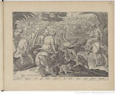 Venationes ferarum, avium, piscium, pugnae bestiariorum & mutuae bestiarum, depictae a Joanne Stradano, editae a Philippo Gallaeo, carmine illustratae a C. Kiliano Dufflaeo -- 1580 -- images