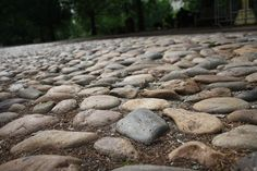 #Philadelphia Cobble stones. - Like this, too, but with plants!