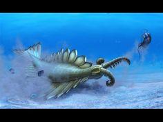 Prehistoric News | The Brain of the World's First Predator - YouTube