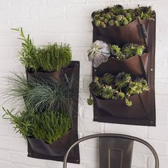 Create a living wall of flowers, salads and herbs from these innovative vertical planters. Choose from brown, leaf green, aubergine, or the brand new strawberry red.Comes as a pack of two. These vertical garden planters are just the job if you have a limited amount of ground space. Simply hang on a suitable wall and fill planter pockets with compost. Sow, water and grow to fill your walls with lovely flowers, salads and herbs. Each planter has four pockets which provides ample space for ...
