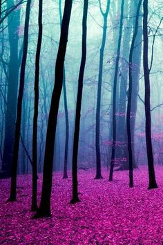 "drxgonfly: "" forest (by Alexander) """