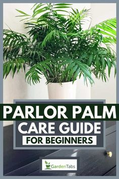 Parlor Palm Care Guide for Beginners Palm Plant Care, Palm Tree Care, Palm Tree Plant, House Plant Care, Palm Plants, Indoor Palm Trees, Indoor Palms, Cat Safe House Plants, Best Air Purifying Plants
