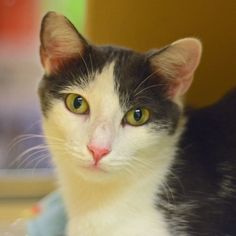 Adoptable Cats at the Protectors of Animals Animal Rescue and Shelter