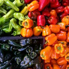 A plethora of perfect #peppers! Find your favorite at Elmhurst Hospital Greenmarket in #Queens - open Tuesdays 8AM-4PM #farmersmarketnyc