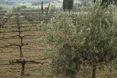 Disfruta de la gastronomía castellana con vistas a nuestros olivos y jardín de variedades. www.restauranteespadana.es