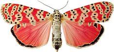 淡々と恐ろしい蛾の画像を貼っていくスレ