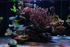 #TankEnvy: Thorly Tan's 135-gallon rimless reef aquarium. Tan was named the December 2011 Tank of the Month by Reefkeeping Magazine.