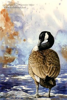 Canada Goose Watercolor Study by Nambroth - Ente And Gans Watercolor Bird, Watercolor Animals, Watercolor Illustration, Watercolor Paintings, Watercolors, Bird Drawings, Colorful Drawings, Animal Drawings, Drawing Animals