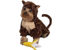 Zack Zoey Plush Curious Monkey Halloween Dog Costume with Poseable Tail FREE Banana Squeak Toy X-Small - costumes XS fits LengthSwirl design, brown plush body with nude accents is soft and warmBendable tail for Top 10 Halloween Costumes, Dog Halloween, Halloween Ideas, Halloween Customs, Family Halloween, Halloween Halloween, Monkey Costumes, Pet Costumes, Costume Ideas