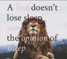 quote a lion doesn't lose sleep - Google Search