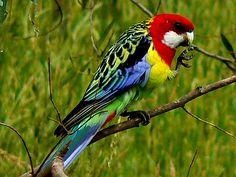strange birds of the world | THE WORLD HAS IT'S OWN BEAUTY