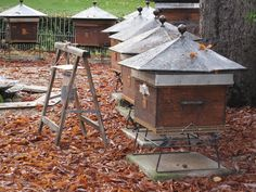 Luxembourg Gardens Trap Apiary