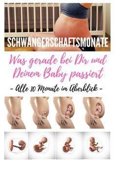 Schwangerschaftsmonate im Überblick - SSM - Was bei der Schwangerschaft bei Dir und Deinem Kind passiert - Die Entwicklung und körperlichen Veränderungen während aller Schwangerschaftswochen SSW und Schwangerschaftsmonate SSM genau beschrieben, die Entwicklung des Embryos, den Verlauf der Schwangerschaft und was bei Dir, der schwangeren Mutter passiert.