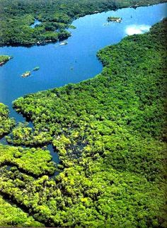 The Amazon Rainforest covers 1.7 billion acres. It is located within nine different nations: Bolivia, Brazil, Colombia, Ecuador, French Guiana, Guyana, Peru, Suriname and Venezuela. The Amazon makes up over half of the earth's remaining rainforests, and is the largest and most species-rich tropical rainforest in the world.