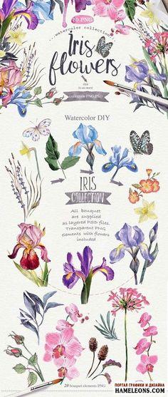 """Акварельные цветы ирисы - исходники для Фотошоп   Watercolor DIY """"IRIS"""""""