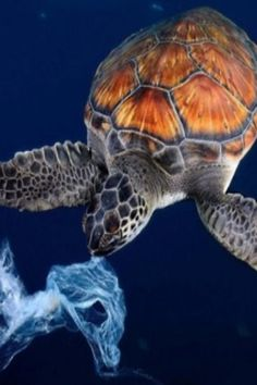 Survey Finds Microplastics In The Guts Of All Seven Sea Turtle Species Ocean Pollution, Plastic Pollution, Sea Turtle Species, World Turtle Day, Funny Animals, Cute Animals, Beach Clean Up, Sea Cow, Turtle Love