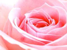 Heart notes Jasmine sambac Tuberose Rose