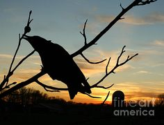 Cawcaw Ovcer Sunset Silhouette Art - photograph by Lesa Fine. Fine art prints and posters for sale.  #silhouetteart #crows #lesafine