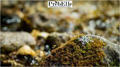 LA STELLA ALPINA  Il fiore alpino per eccellenza, il gioiello PrèbElle dalla straordinaria magnificenza...La Stella Alpina, il ciondolo per le occasioni più raffinate