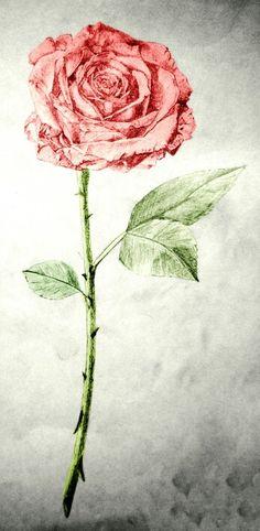Tattoo idea rose