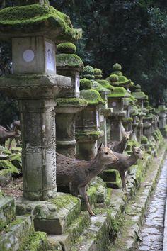 Deer between Japanese Stone Lanterns ( Ishidōrō 石灯籠 ) @ Kasuga Taisha Shrine 春日大社 Nara Japan.