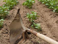 MY GARDEN | Chalupa, vila, záhrada, rastliny | VK