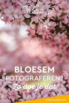 Bloesem is prachtig, maar bloesem fotograferen kan een uitdaging zijn. Daarom deel ik in dit artikel mijn 8 beste tips om bloesem vast te leggen.