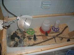 Bathtub chick brooder!