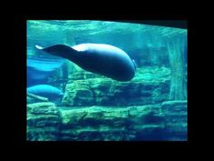 Northern Lights Drive-In: Manatees Manatees, Whale, Northern Lights, Blogging, Photography, Animals, Posts, Tips, Inspiration