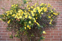 9 of the Best Plants for Trellises and Archways - Page 4
