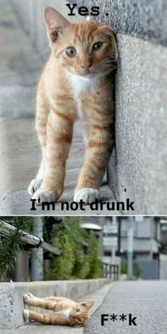 Go Home You're Drunk! (18 Pics)