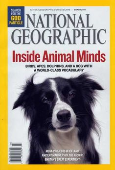 National Geographic March 2000 Border Collie Cover / National Geographic Photography / Covers
