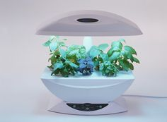 Ditch the Dirt and Try Hydroponic Gardening