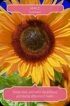 "Daily Angel Oracle Card: Sunflower ~ Smile, from the Flower Therapy Oracle Card deck, by Doreen Virtue Ph.D and Robert Reeves Sunflower ~ Smile: ""Simply smile, and notice the profound and healing d..."