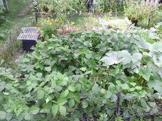 Garden 8.2014