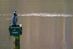 Vogel foto: Phalacrocorax carbo / Aalscholver / Great Cormorant