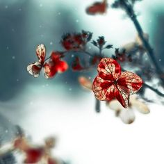 Flower Photography, Red, Teal Home Decor, Nature Print, Women, Flower Wall Art…