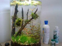 Walstad shrimp cylinder