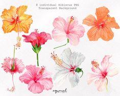 Hibiscus – Home Decor Gardening Flowers Tropical Flowers, Tropical Flower Tattoos, Hawaiian Flowers, Hibiscus Flowers, Lilies Flowers, Flowers Garden, Hibiscus Tree, Hibiscus Garden, Unique Flowers