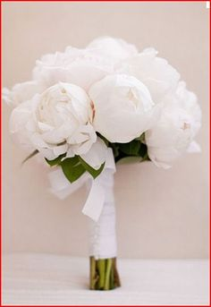 pure white peonie bouquet with minimal greenery to add demension to the photos when placed against an all white dress,