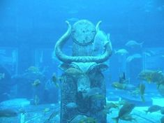 The Royal at Atlantis, Paradise Island Picture: Is this the lost City of Atlantis? - Check out Tripadvisor members' candid photos and videos of The Royal at Atlantis Underwater Ruins, Underwater Photos, Underwater Photography, Underwater Sculpture, Atlantis, Historical Artifacts, Ancient Artifacts, Sunken City, Ancient Mysteries